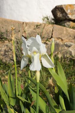 Wild Flowers-159