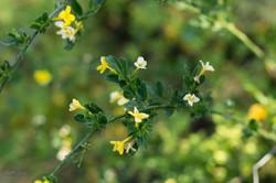 Wild Flowers-257