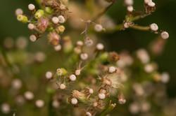 Wild Flowers-528