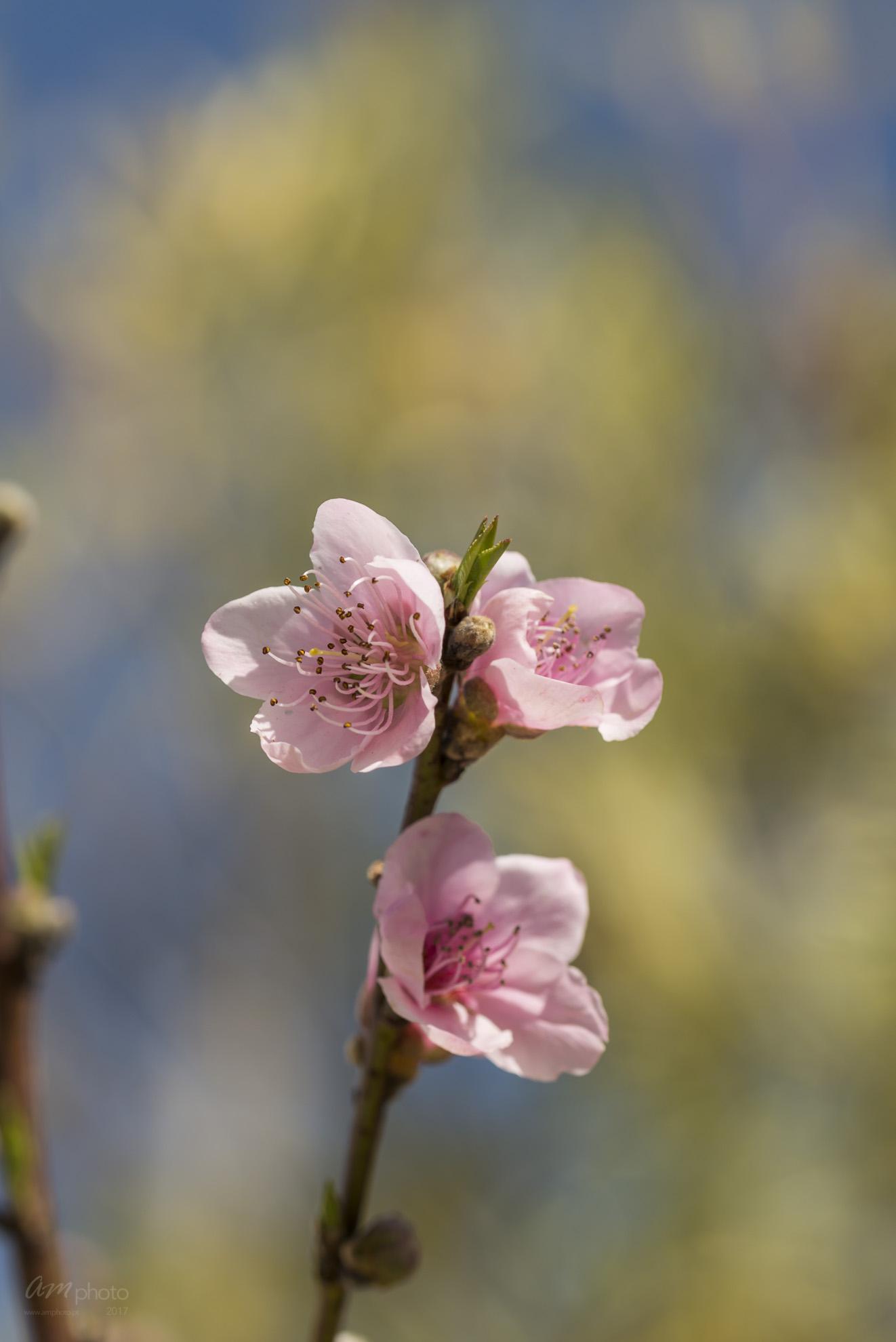 Wild Flowers-734