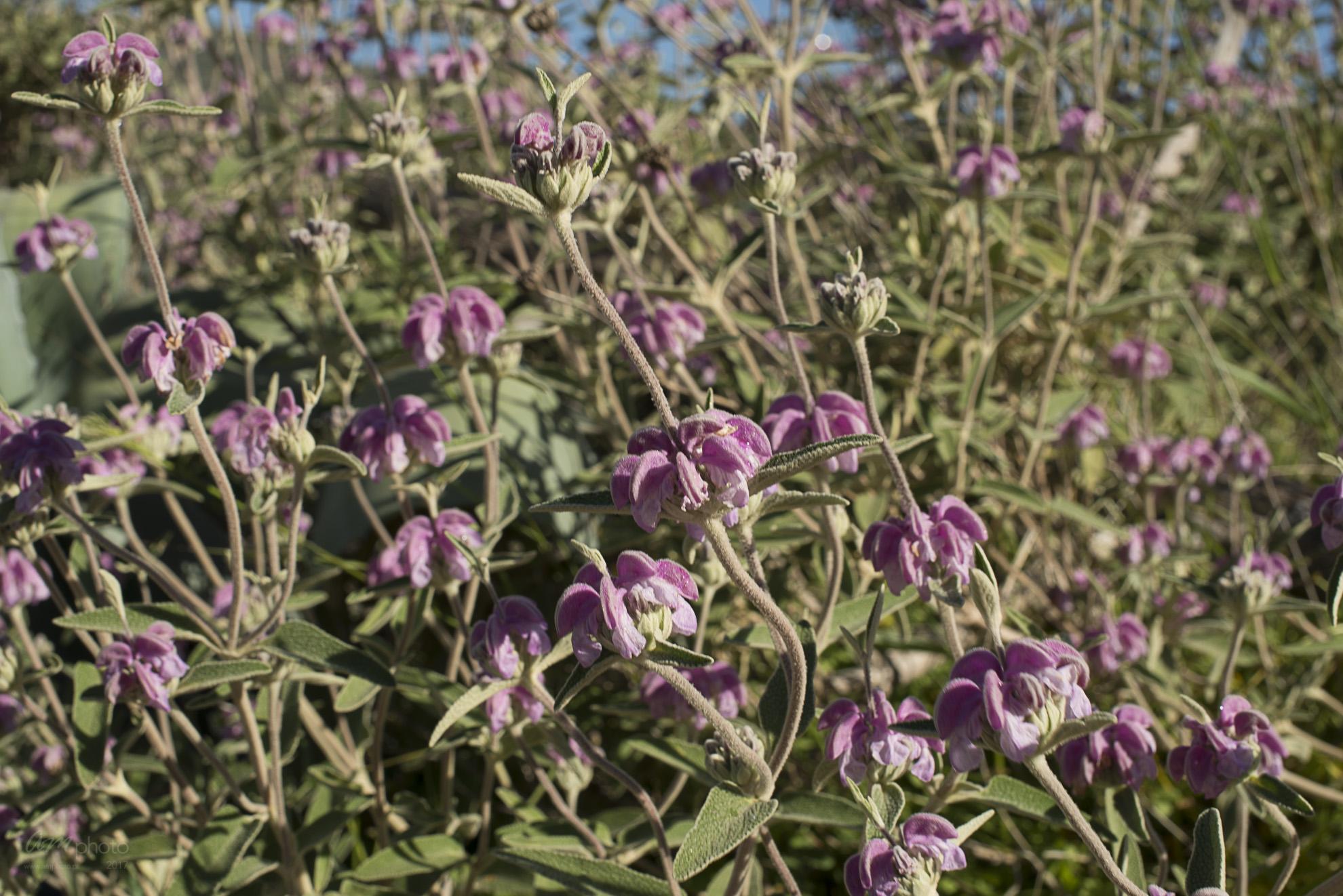 Wild Flowers-279