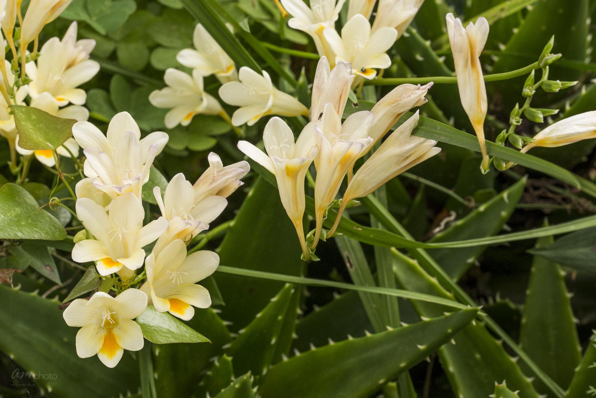 Wild Flowers-537