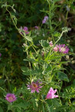 Wild Flowers-244