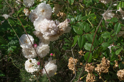 Wild Flowers-42