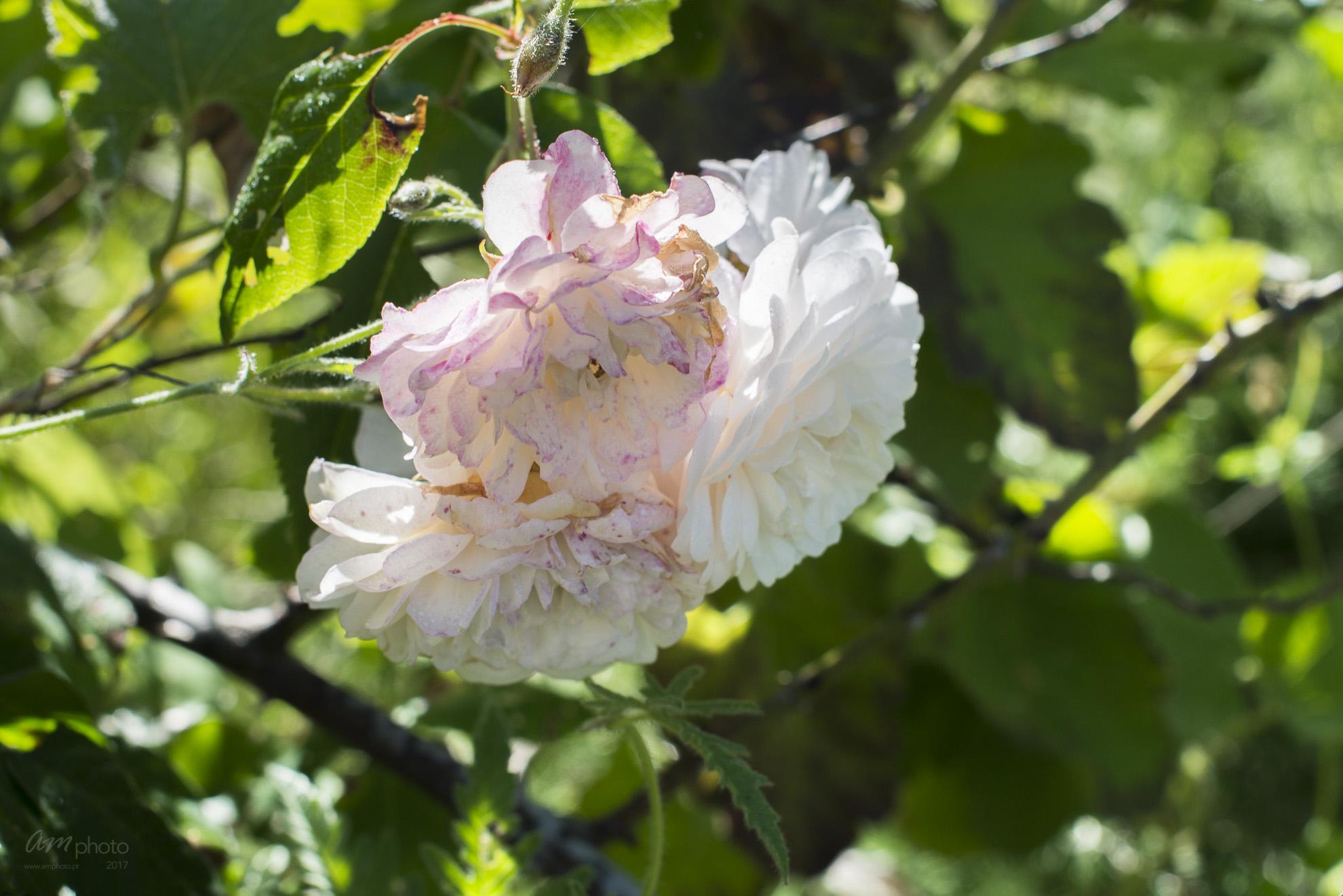 Wild Flowers-36