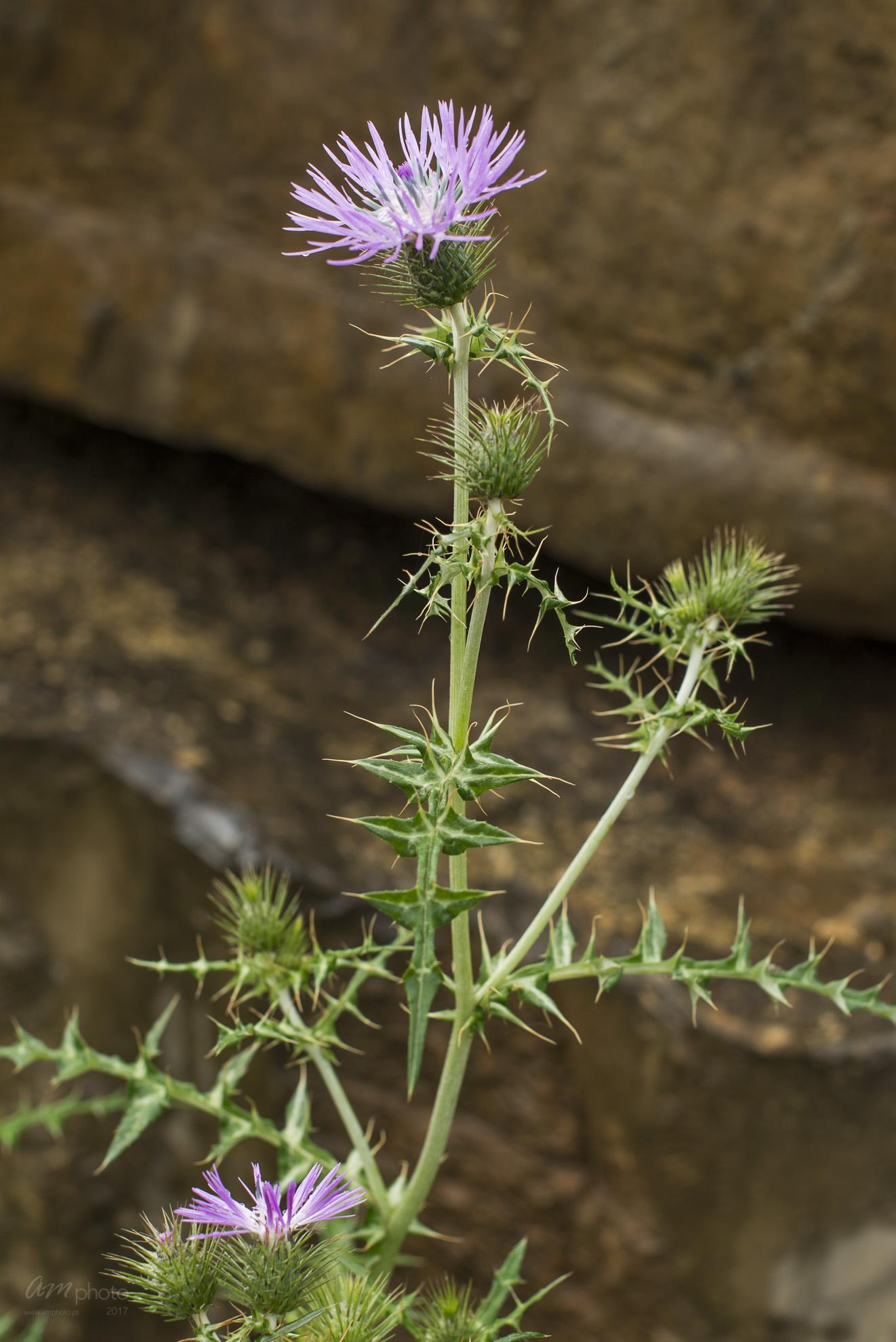 Wild Flowers-474