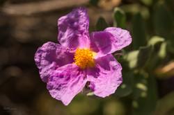 Wild Flowers-671