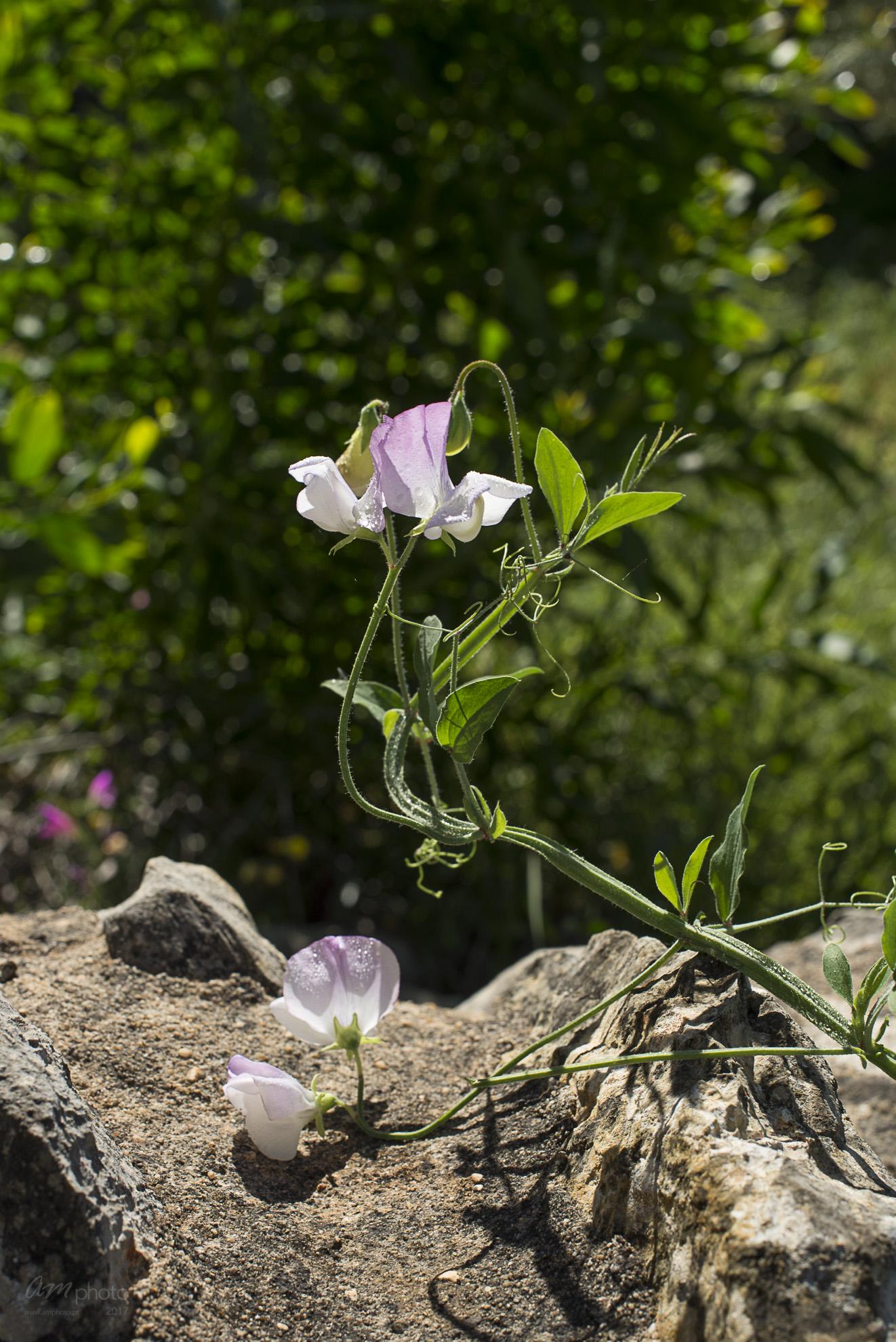 Wild Flowers-210