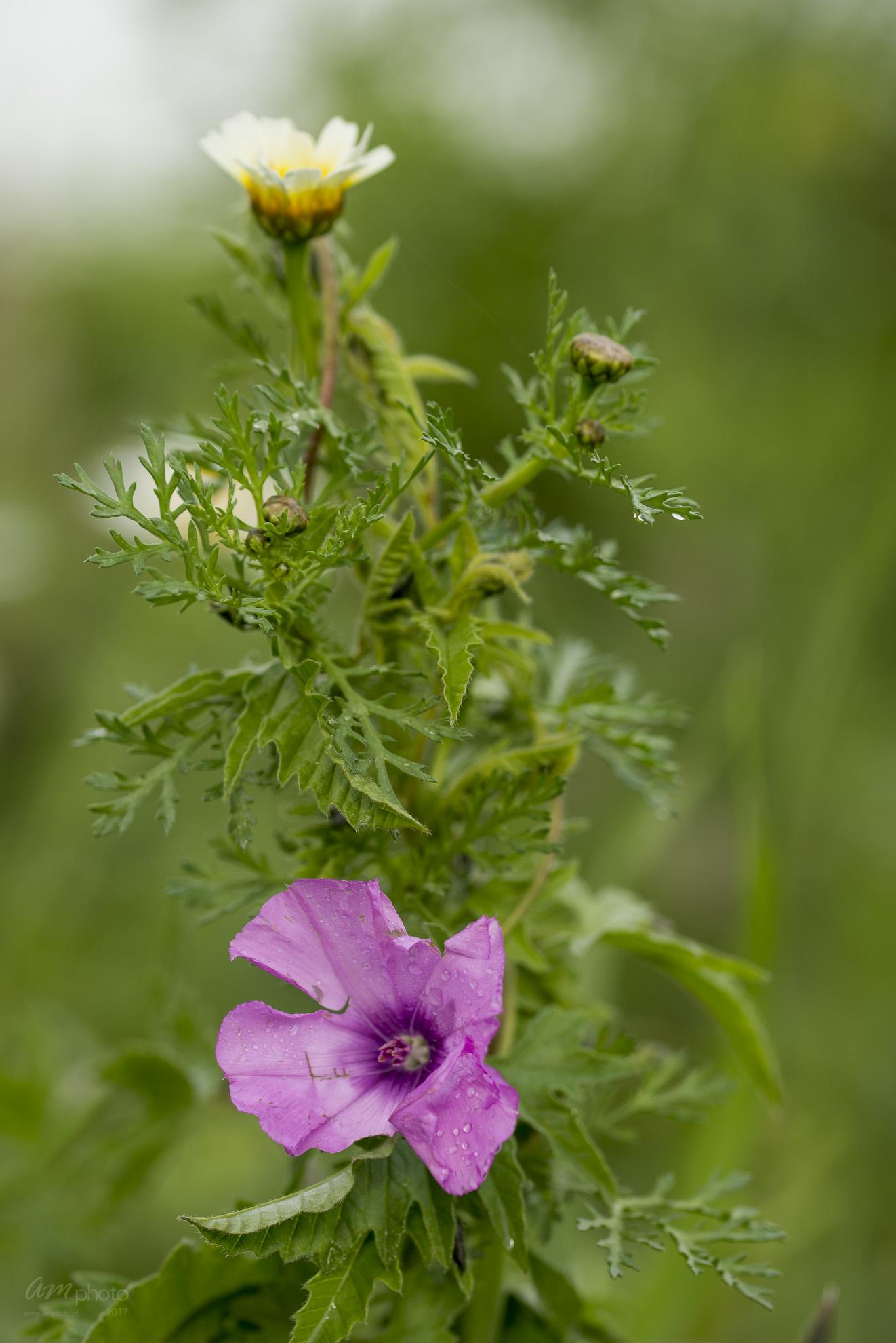 Wild Flowers-455