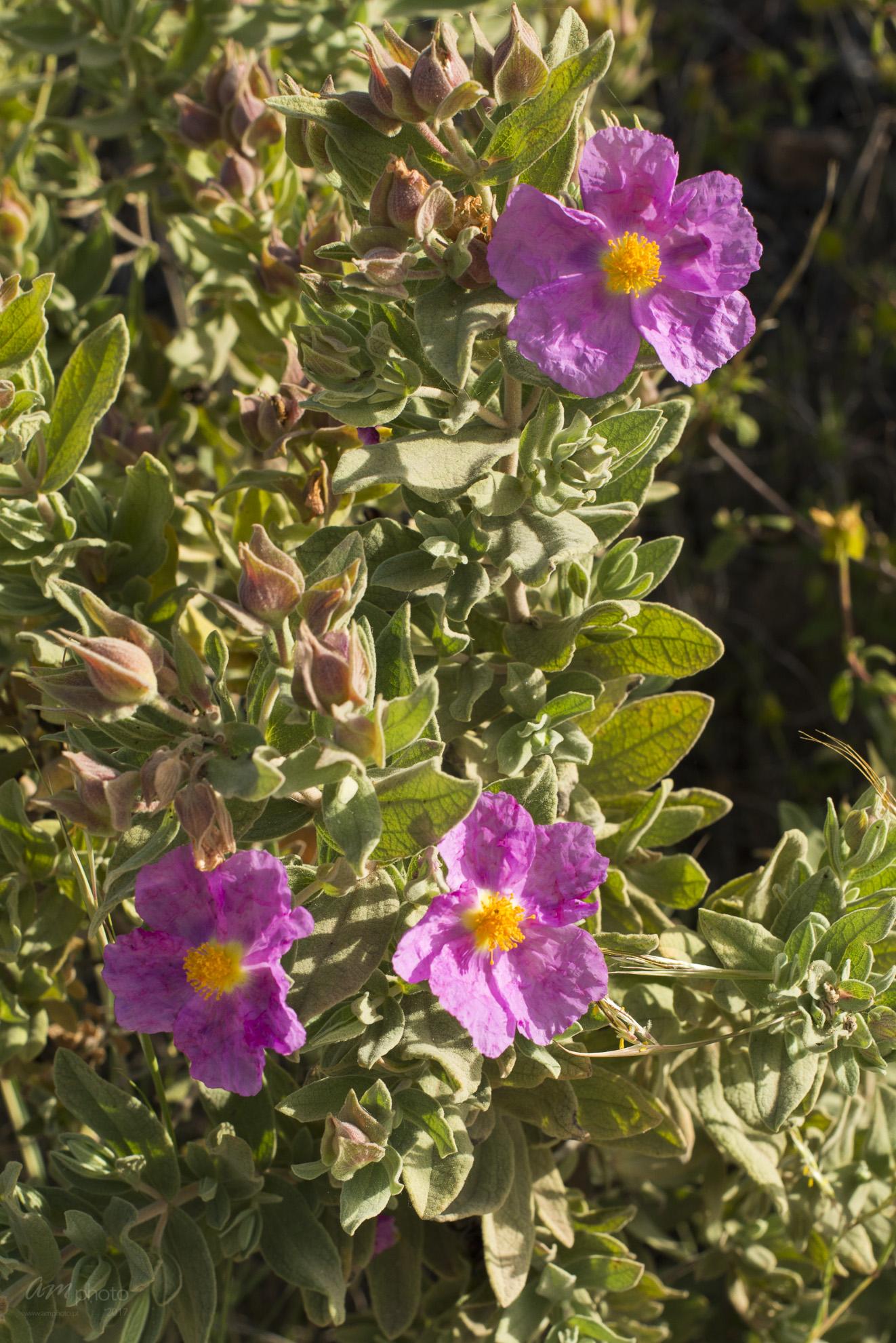 Wild Flowers-109