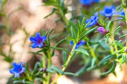 Wild Flowers-580