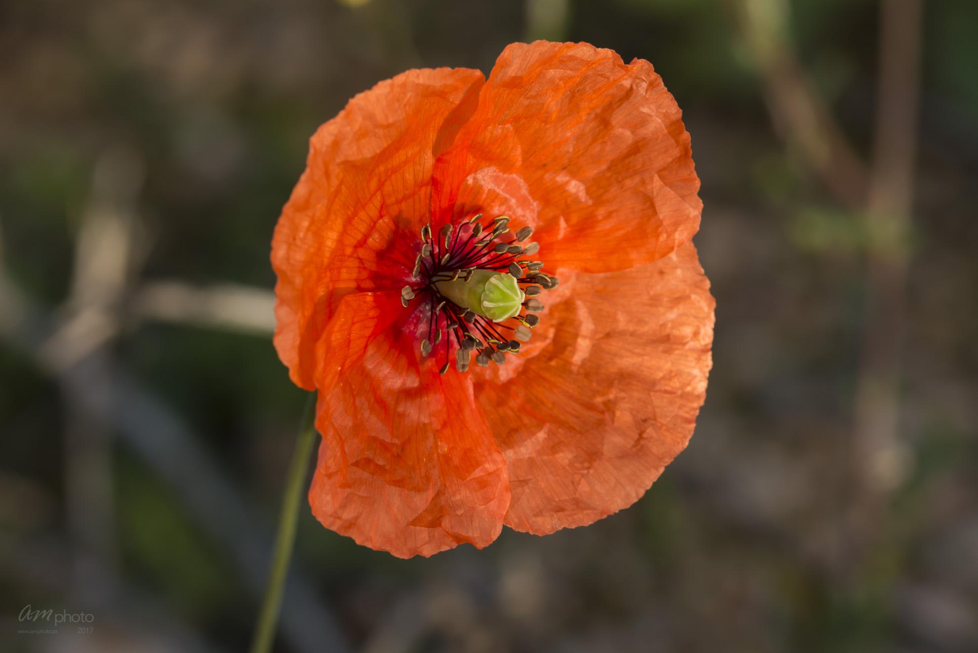Wild Flowers-627