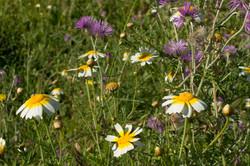 Wild Flowers-275