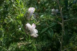 Wild Flowers-1-2