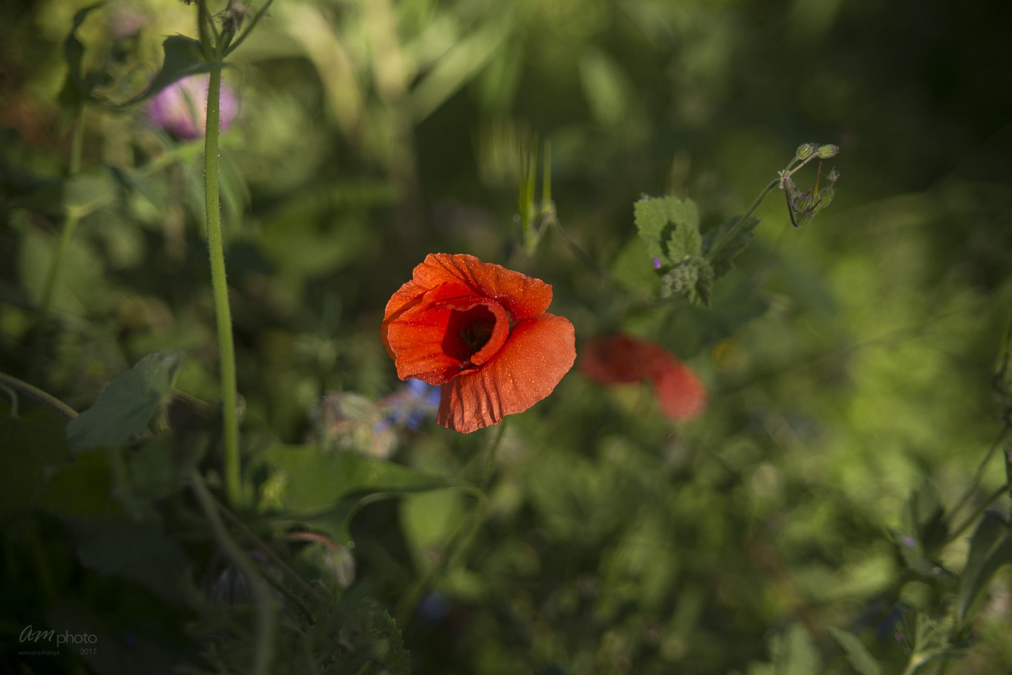 Wild Flowers-343