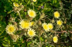Wild Flowers-136