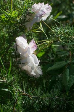 Wild Flowers-21