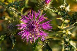 Wild Flowers-652