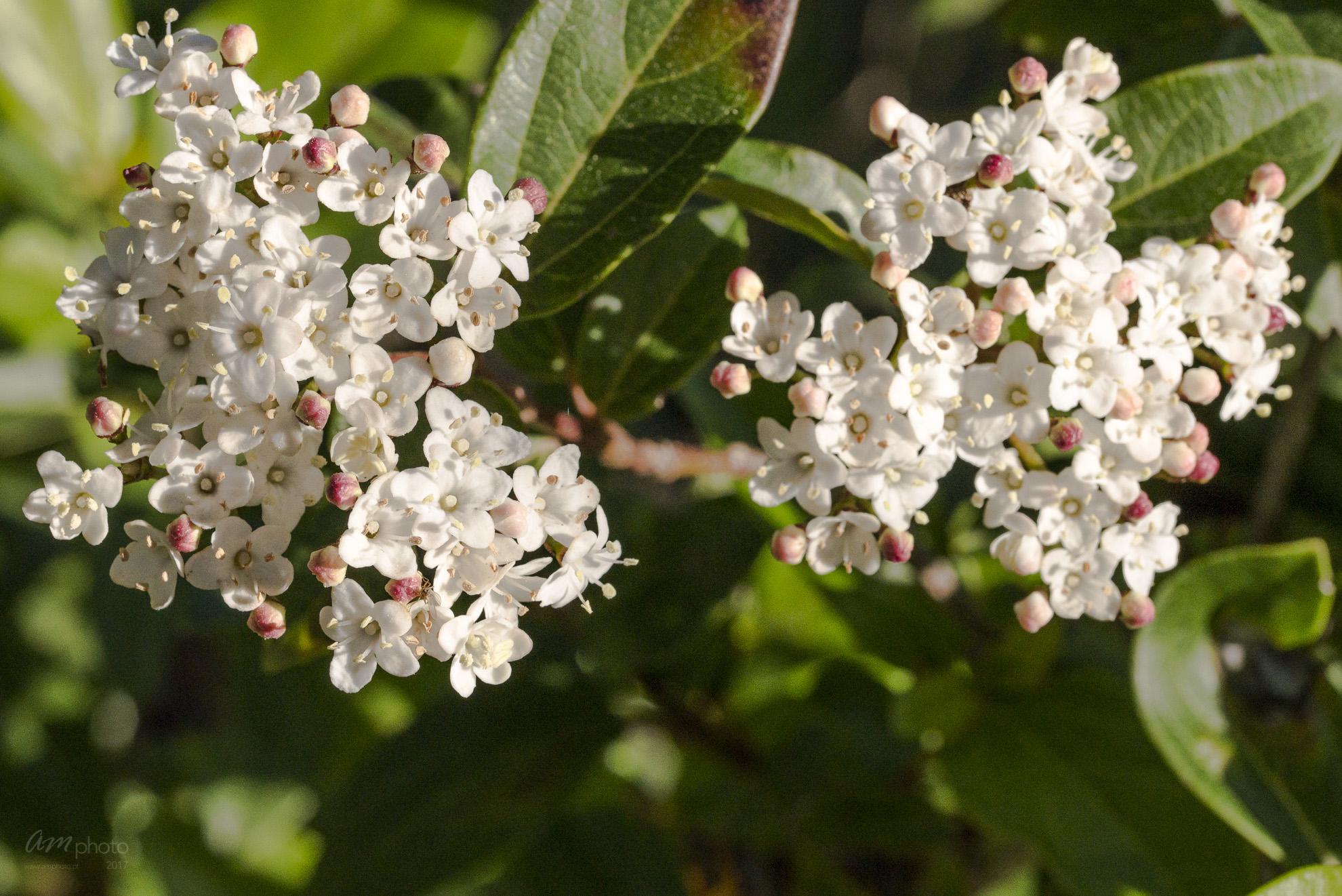 Wild Flowers-573