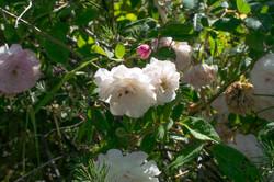 Wild Flowers-39