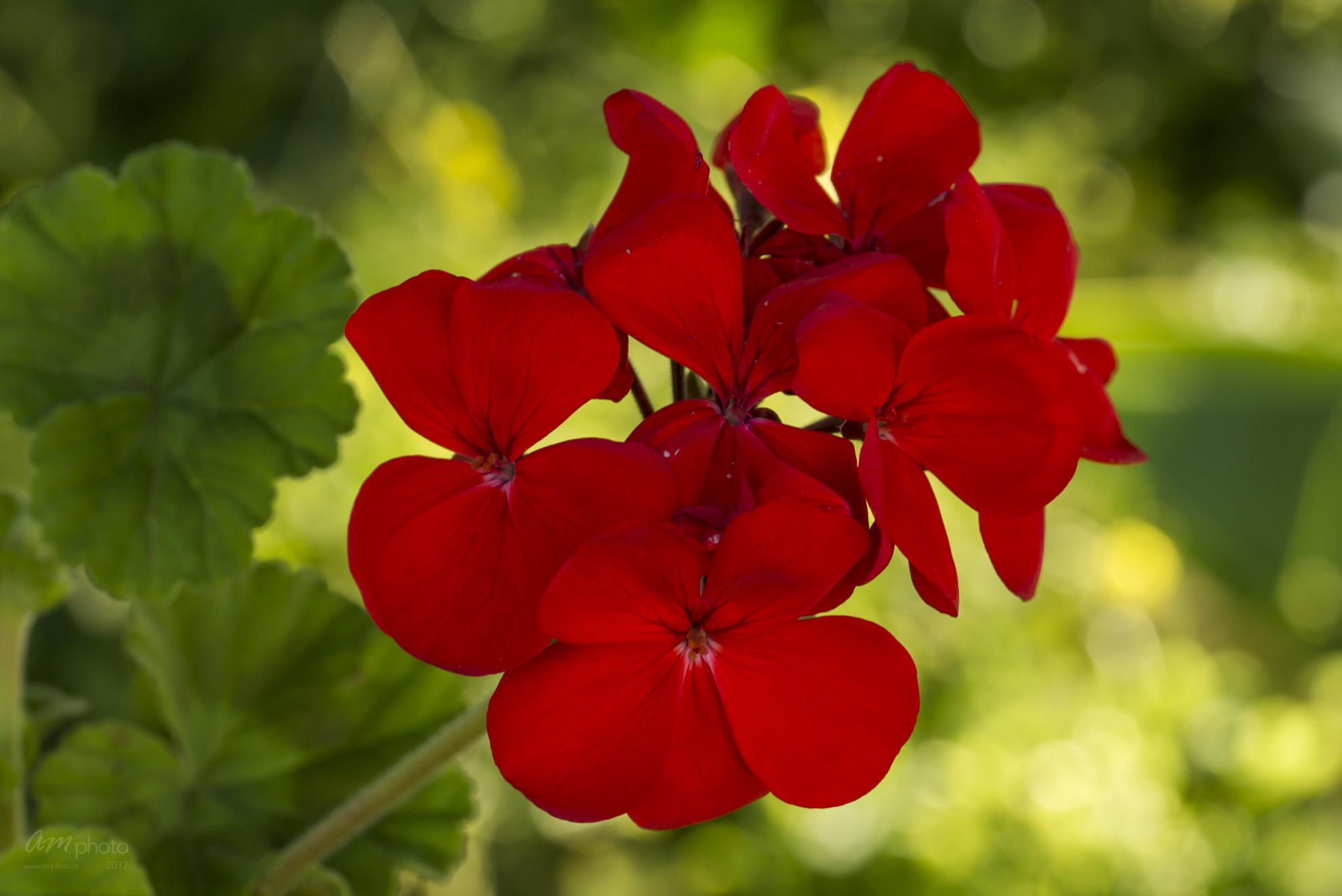 Wild Flowers-668