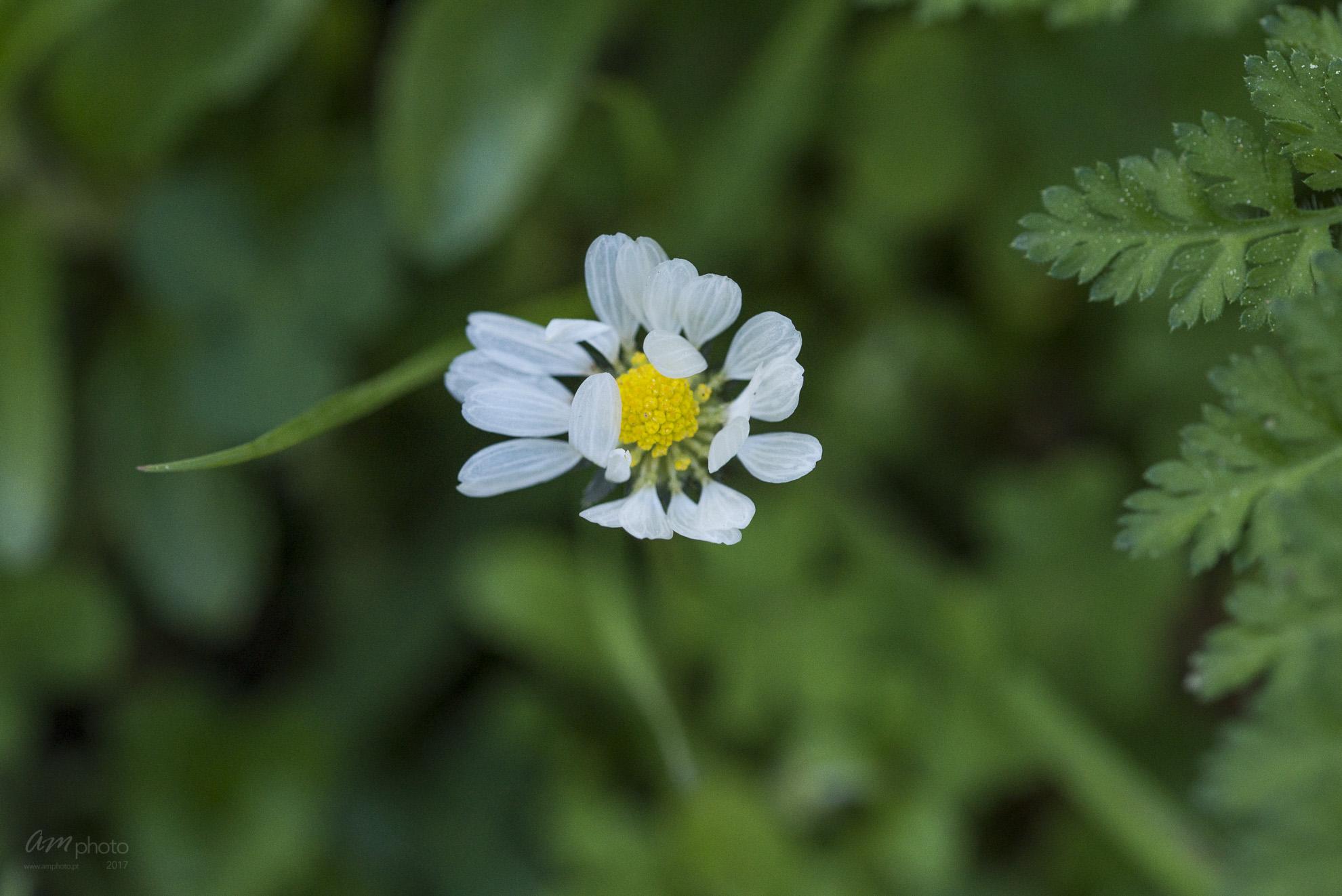 Wild Flowers-582