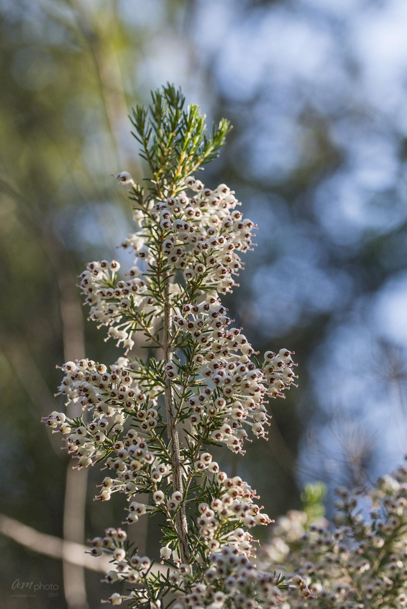 Wild Flowers-569