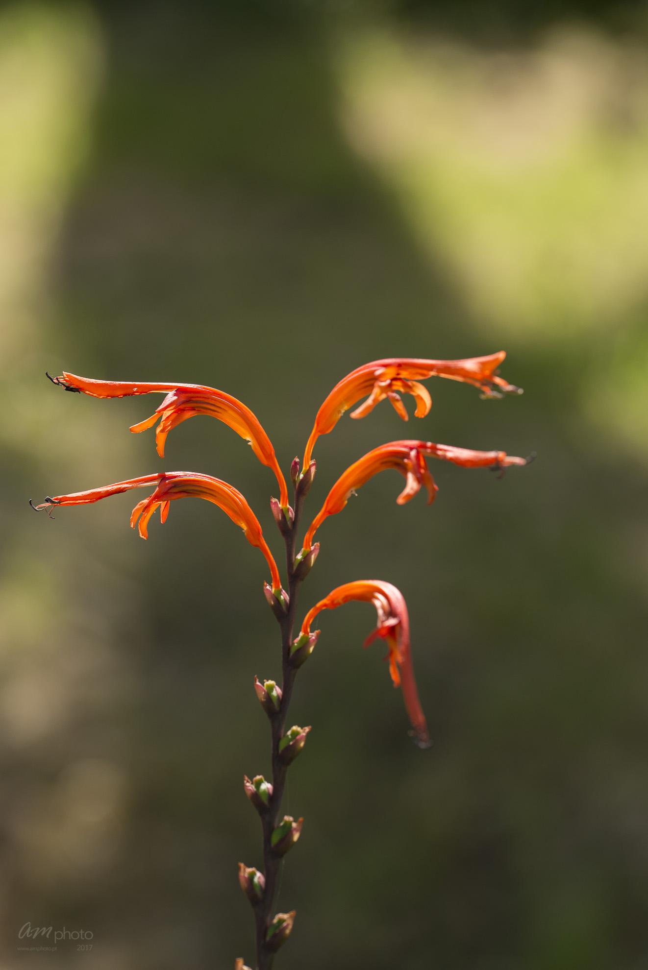 Wild Flowers-742