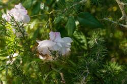 Wild Flowers-35