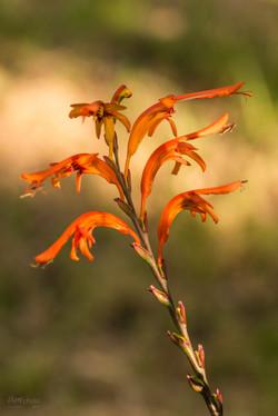 Wild Flowers-548