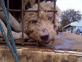 Soi Dog Foundation: Empty Buriram