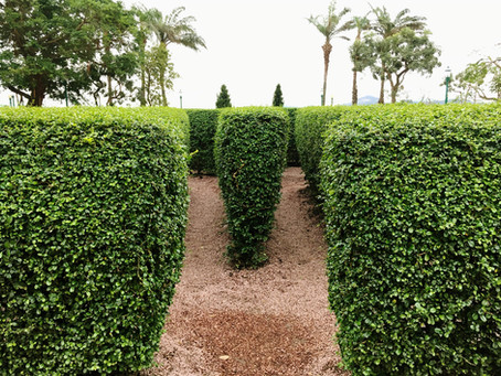 Lessons from a Hedge Maze