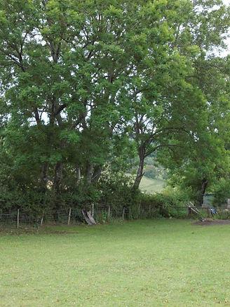 Camping under the Ash tree.JPG