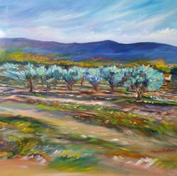Les oliviers de Saint Saturnin