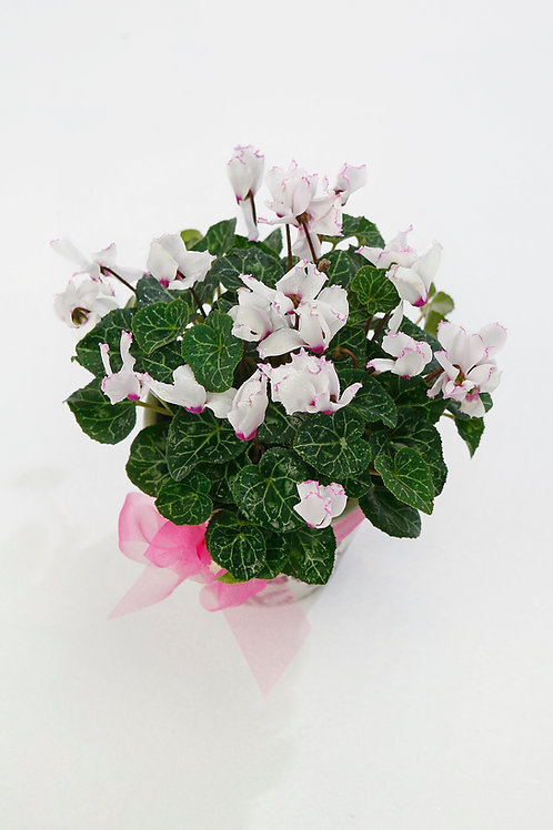Seasonal Plants, prices from...