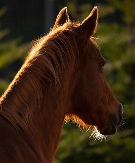 calm healthy horses check list