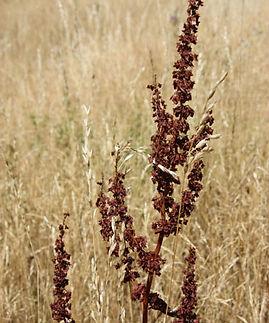 problem pasture species