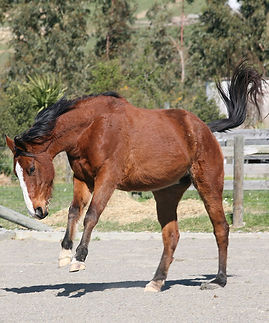 behavioural issues in horses