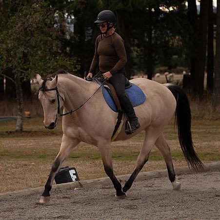 Calm Healthy Horse