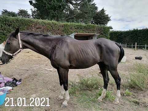 Horse in poor condition before diet changes were made