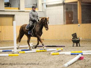 Stangentraining Horse Park Dielsdorf geht im Februar weiter