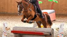 Hallencrosstraining Horse Park Dielsdorf Ostern 03.-05.04.2021