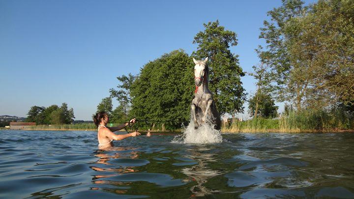 Zirkuslektionen im Wasser abrufen
