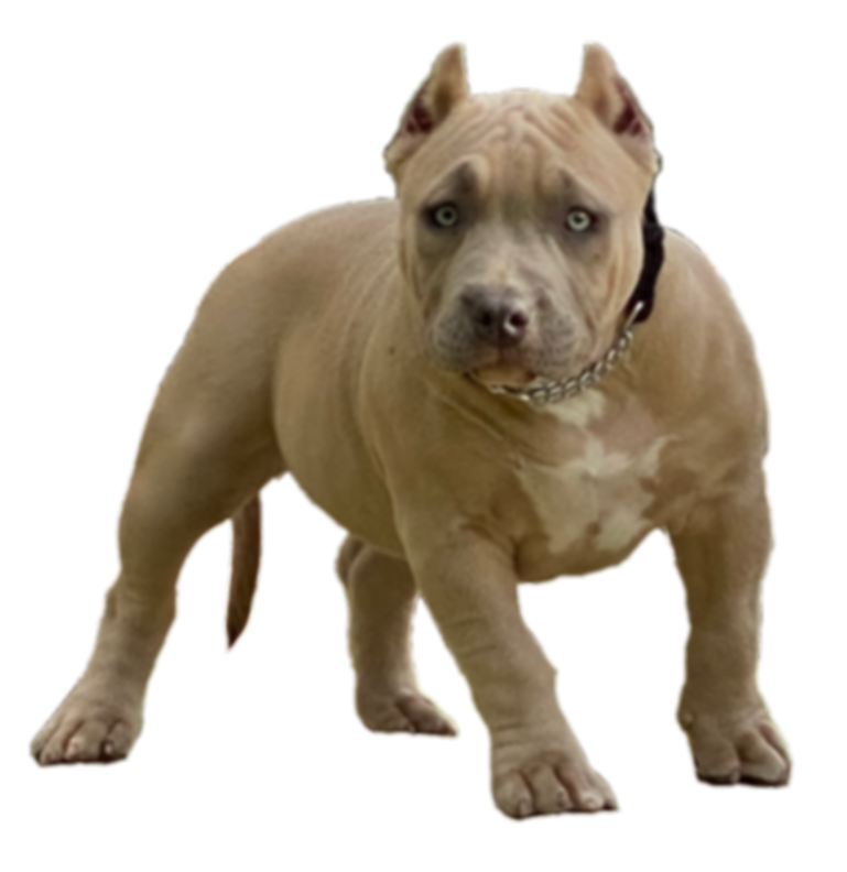 Spice(1).png