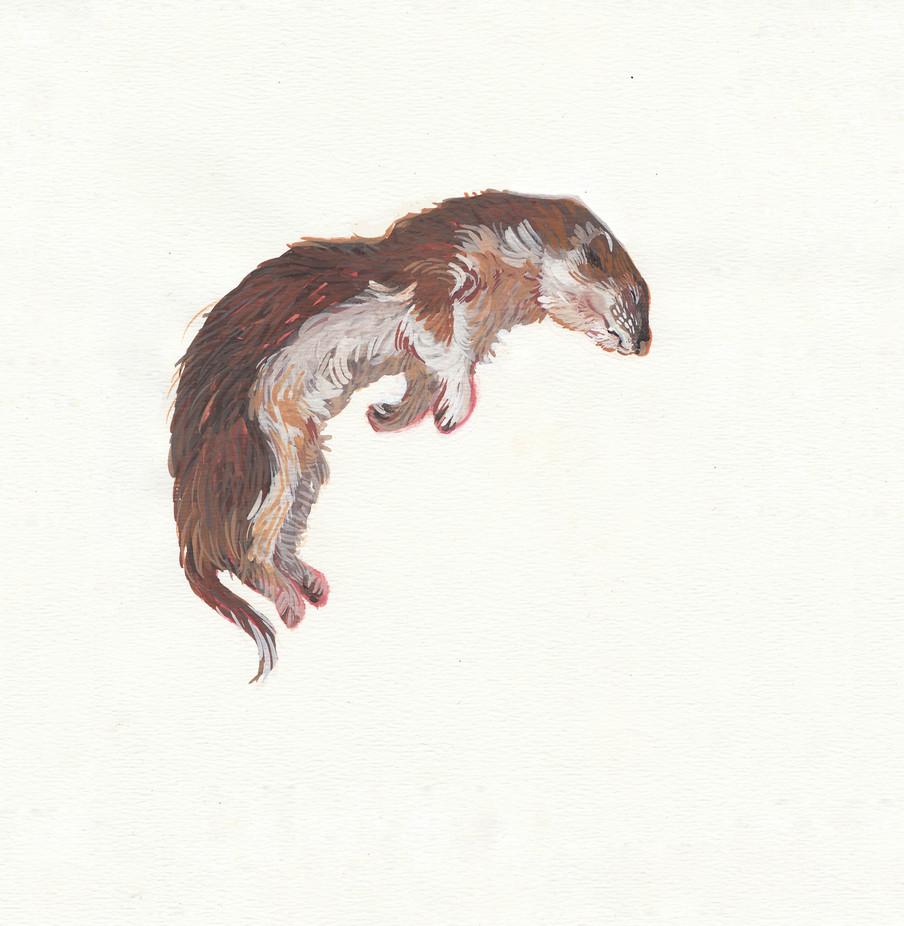 6 Weasel Print.jpg