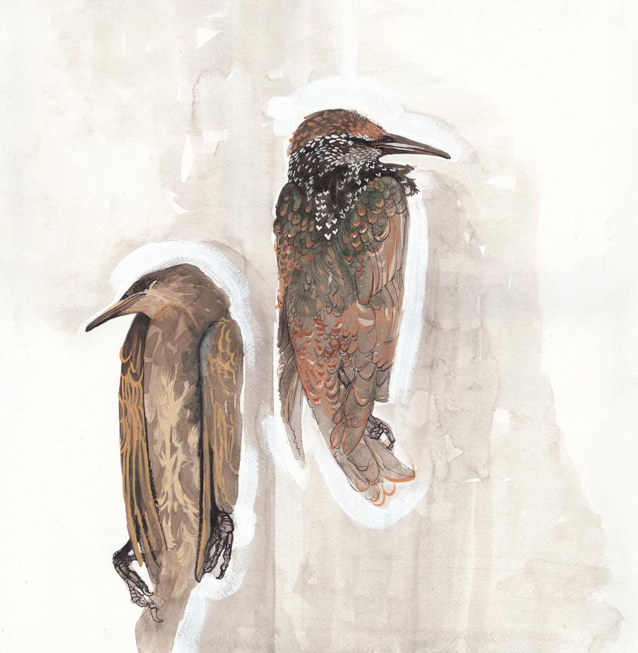3 Starlings Print.jpg