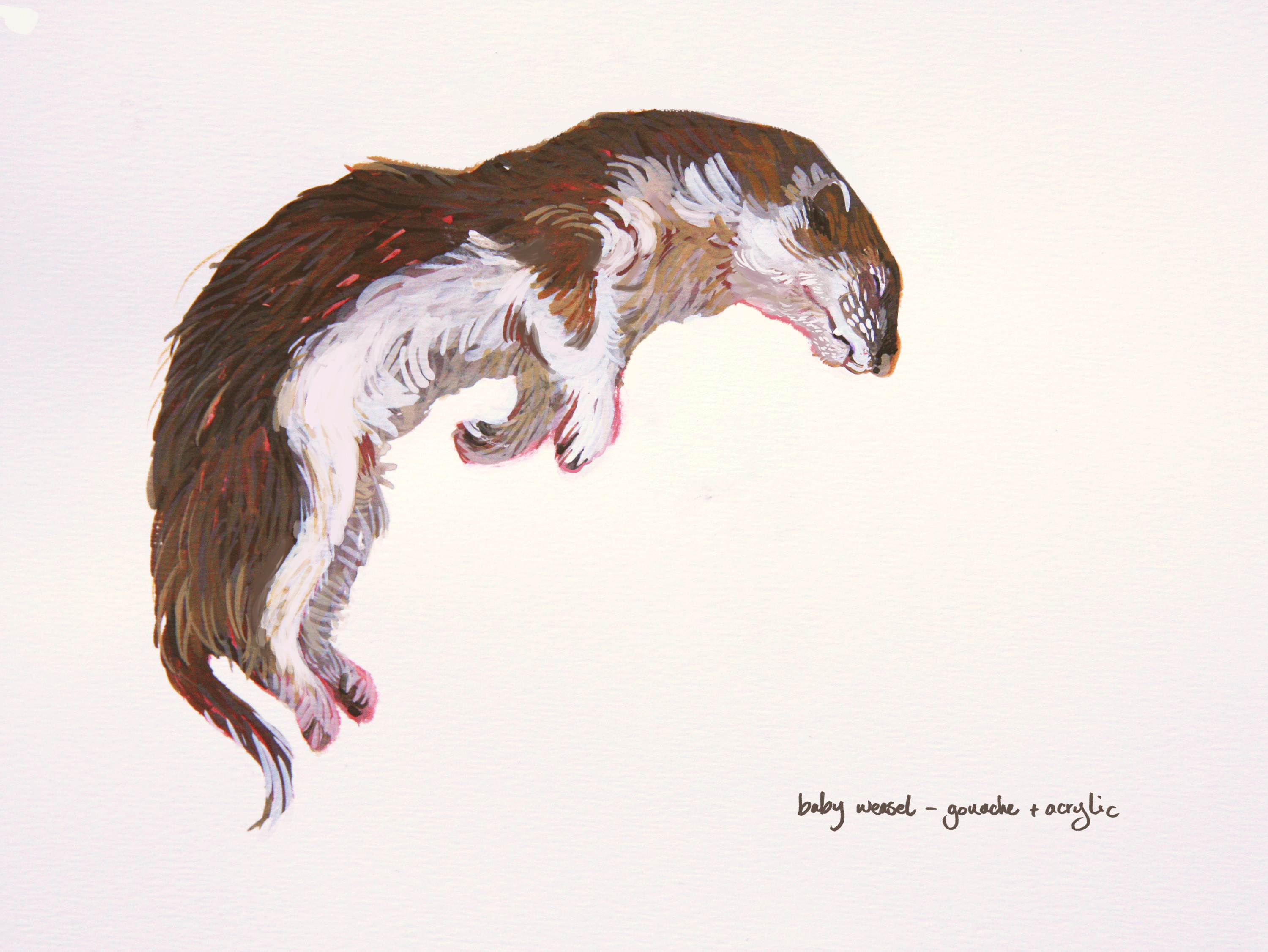 Young Weasel