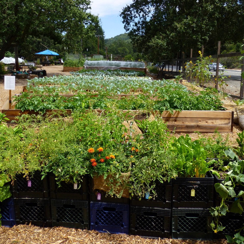 Lafayette Community Garden