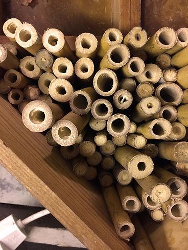 Bambusröhrchen für Wildbienen