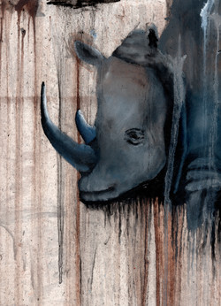 Andrew Swerz Rhino.jpeg